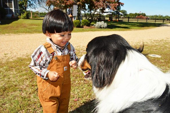 A kid playing with dog